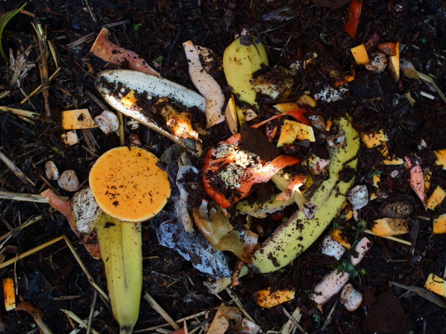 How do I minimise food waste?